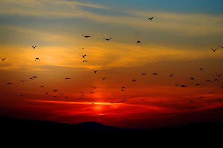 flock of birds flying above the mountain during sunset