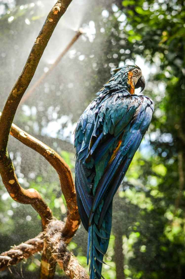 blue macaw perched on tree twig