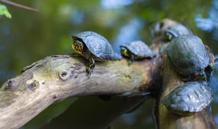 nature water animals turtle